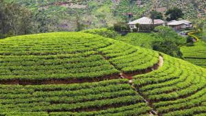 Srí Lanka, fotka 3