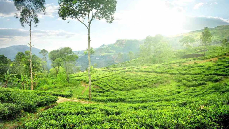 Srí Lanka, fotka 2